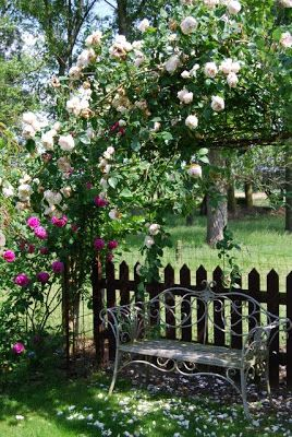 (P) beautiful spot to relax - bench with climbing roses