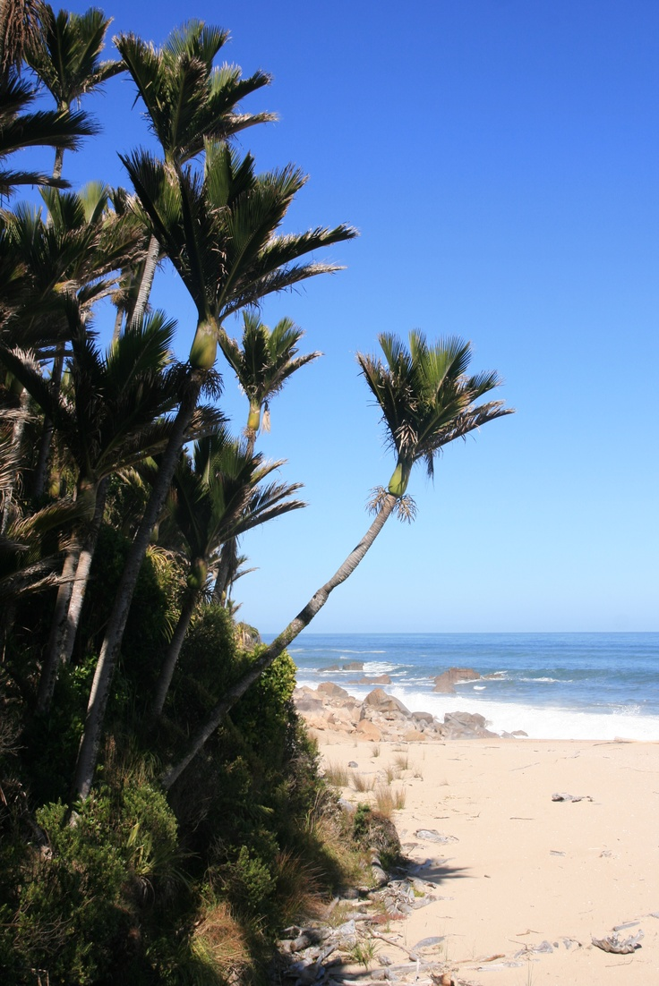 The beach on the Heaphy Track. #hiking #walking #newzealand #nzwalks