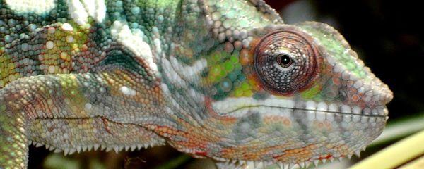 Biodiversité de Madagascar