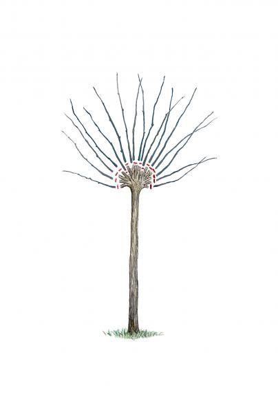 die besten 25 zierweide ideen auf pinterest harlekinweide trompetenbaum und baum vorgarten. Black Bedroom Furniture Sets. Home Design Ideas