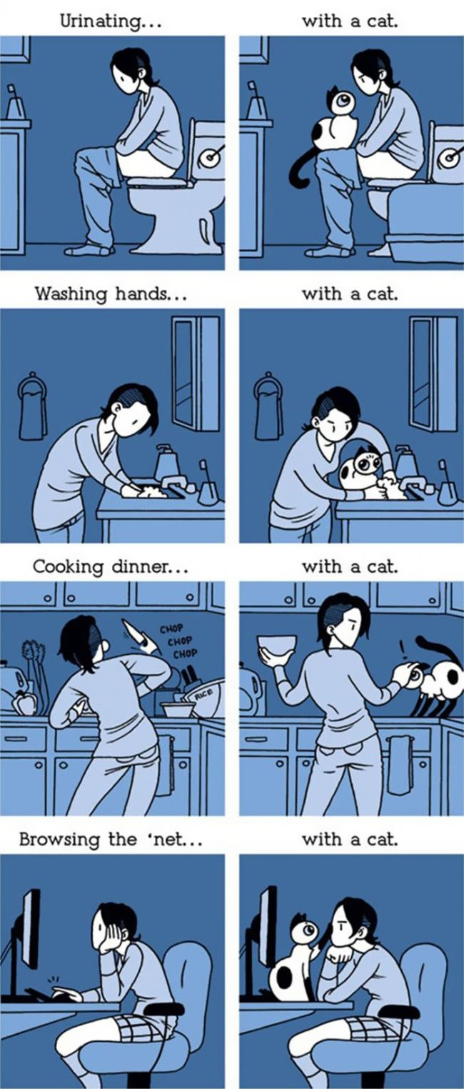 15 Hilarious Comic Strips Every Cat Owner Will Understand. https://brightside.me/article/15-funny-comic-strips-every-cat-owner-will-understand-29105/