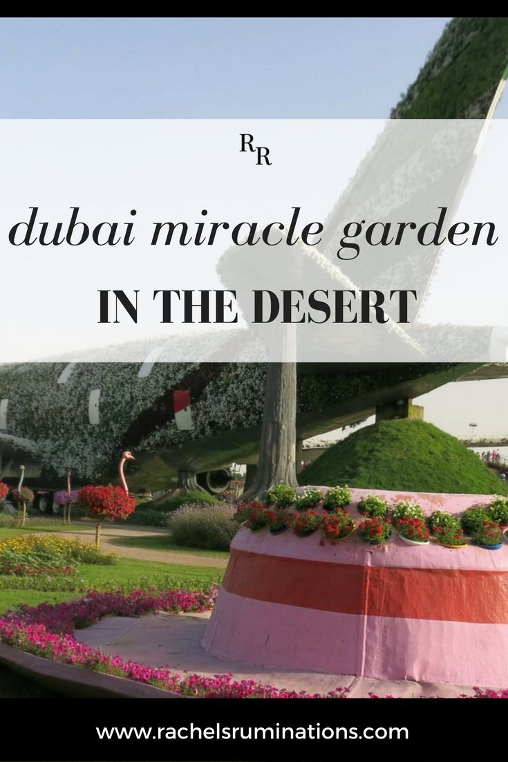 Dubai Miracle Garden: Absurdity In The Desert. The taxi ride promised little excitement. It was mid-afternoon and the traffic flowed smoothly past the shiny tall buildings. It was the standard Dubai scenery. Click here to discover this little known Dubai gem!