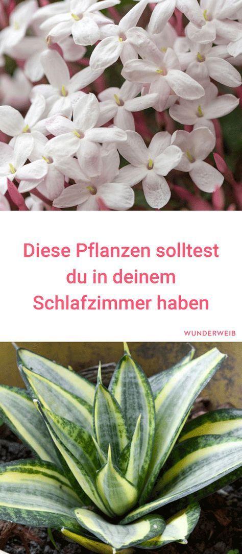 Die besten 25+ Blumen schlafzimmer Ideen auf Pinterest | Pflanzen ...
