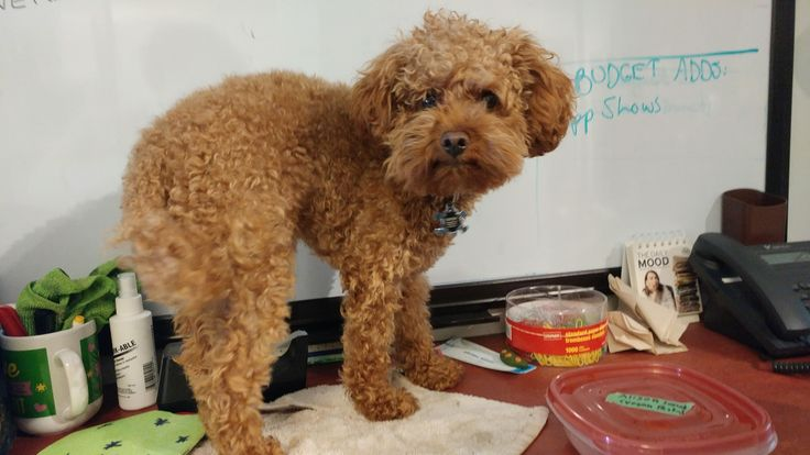 Cute! Roundup: Office dogs cat ergonomics chasing tail and more!