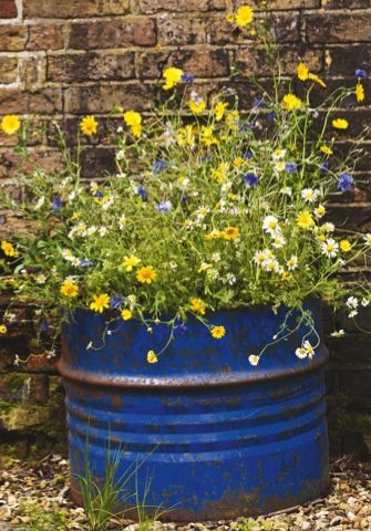 Since seeing this container planting over on Garden's Illustrated's website earlier this summer, I have been all sorts of obsessed with mini meadows in pots.  This lovely thing was grown from seed,...
