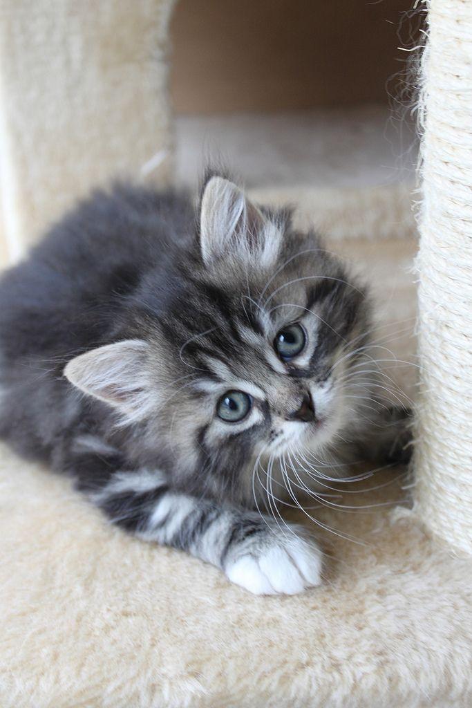 Pin On Kittens Cutest