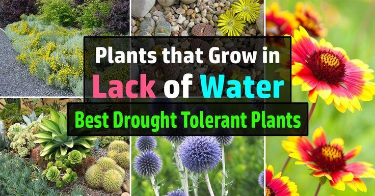 De 15 b sta gardening bilderna p pinterest for Plants that live long
