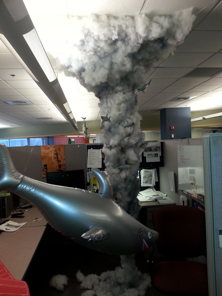 Cubicle sharknado - best coworker ever!