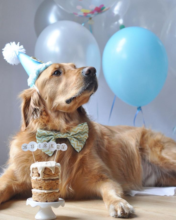 Let Me Know When I Can Eat Some Cake Goldens Dogs Dog Birthday