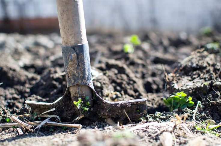 Get out in the garden and make it ready for spring using our helpful tips http://bit.ly/2k2JTRd