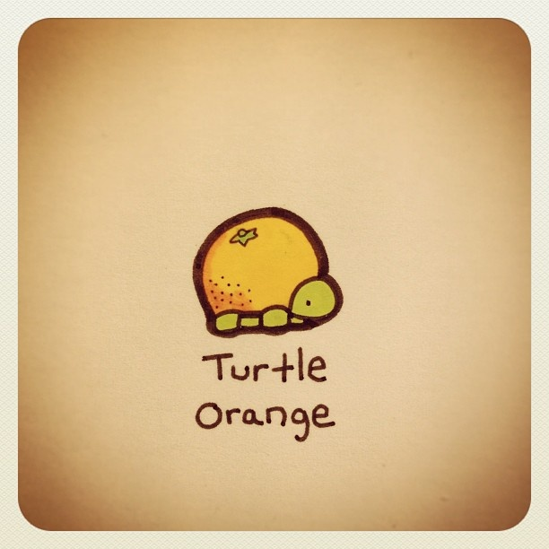 Turtle Orange #turtleadayjuly - @turtlewayne- #webstagram