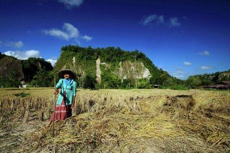 Gery Arsuma: Nuansa pagi di bawah kaki Ngarai Sianok Bukittinggi. Memiliki panorama alam dan sawah yang membentang luas di kaki Ngarai Sianok, Bukittinggi ini. Yang juga menjadi ladang nafkah bagi penghuni sekitar Ngarai.