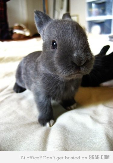 baby bunny. Such a strange new thing...
