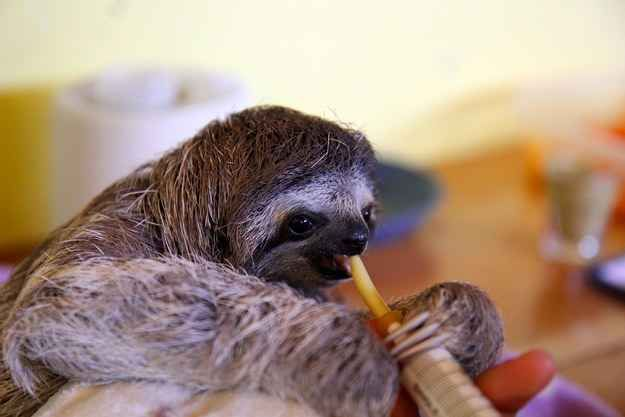 So, for example, this photo has the same effect...   Don't Be Sad, Look At These Baby Sloths Eating Vegetables