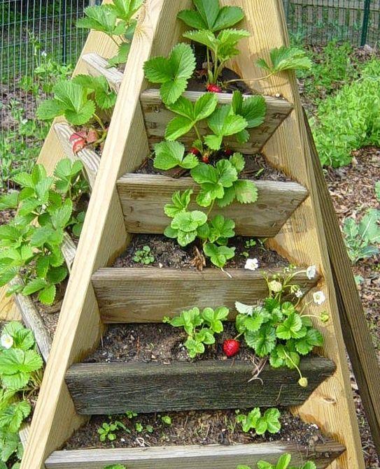 Pyramid strawberry tower plans gardening pinterest - Huerto vertical casero ...