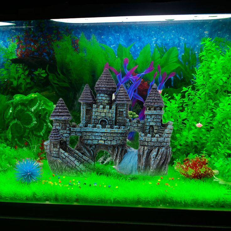 66 best images about customer 39 s fish tanks on pinterest for Best fish tanks