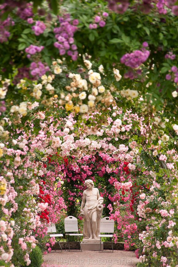 49 best Rosen images on Pinterest Beautiful roses, Pink flowers