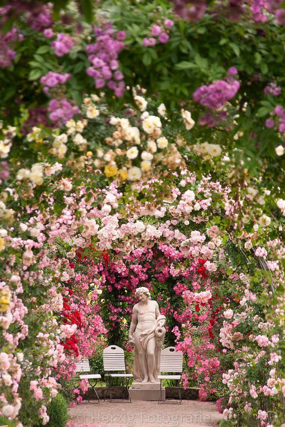 Rosen Neuheiten Garten Baden-Baden, Germany, nur 1,1, km vom www.hotel-am-sophienpark.de entfernt. Von hier hat man einen wundervollen Blick ins Grün Baden-Badens
