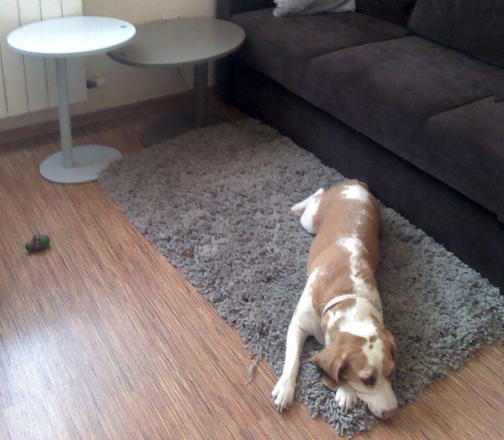 Sweet beagle and BIXBIT Dot tables.