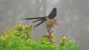 Image result for identifying the birds of kzn