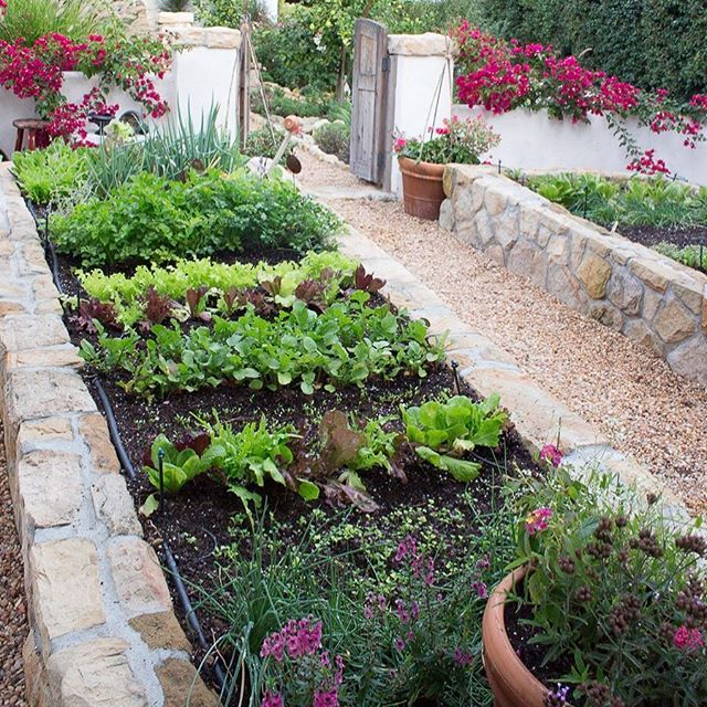 Fall Vegetable Garden Ideas Part - 49: The Fall Vegetable Garden Is My Hands Down Favorite. This Weekend We Will  Be Testing A Couple Of New Salad Ideas ...