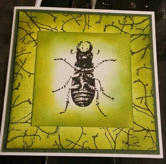 Bug card