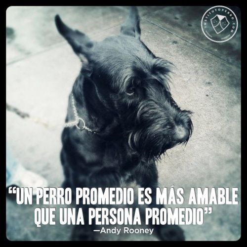 frases perros 3