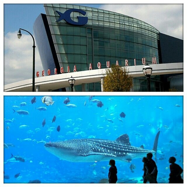 Georgia Aquarium Free Admission Me Mommy Discount