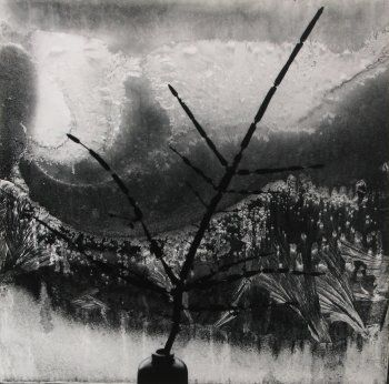 Minor White, Ritual Branch, 1958