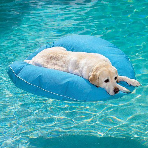 プールで遊び倒した後の犬03