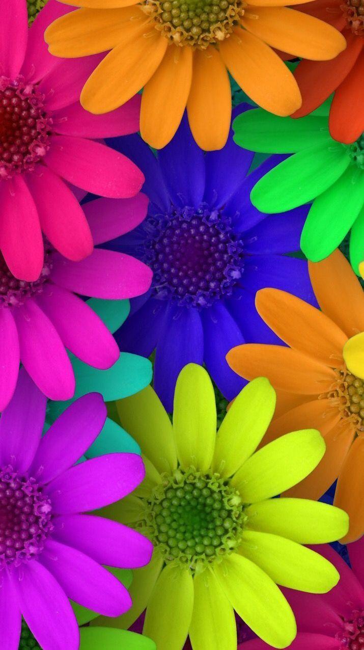 Color En Flores Fondos De Pantalla De Primavera Fondos De Pantalla Naturaleza Ideas De Fondos De Pantalla