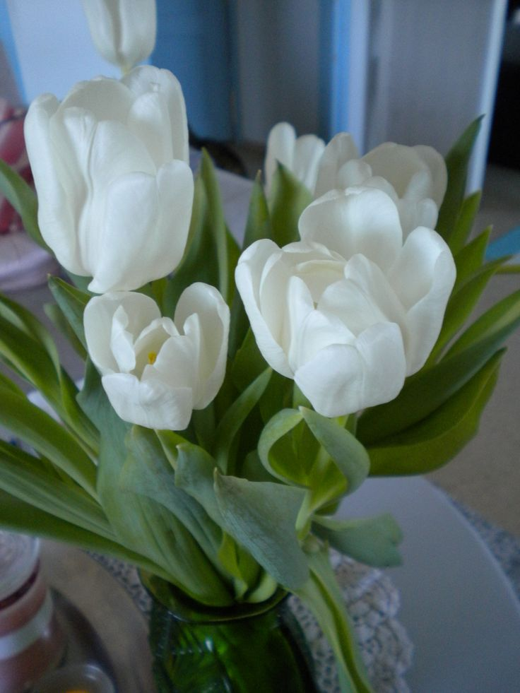 tulips (own photo)