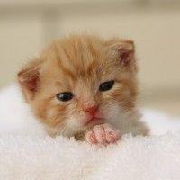 #dogalize Gatos bebes: ¿cómo cuidar un gato pequeño? #dogs #cats #pets