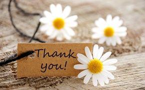 Обои цветы, flowers, спасибо, thank you, ромашки, card, daisies, карта