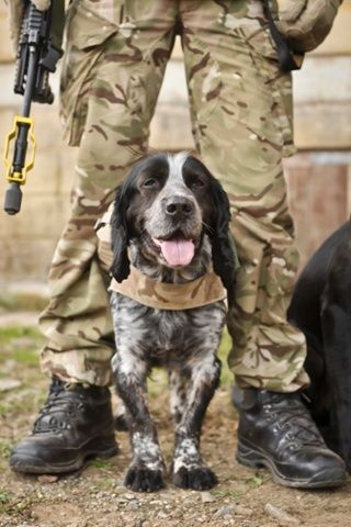Military working dog Quin is photographed with his handler at the Wiltshire military training ground of Salisbury Plain as 7th Armoured Brigade prepare to deploy to Afghanistan on Operation Herrick 19. Photograph: Ben Birchall/PA