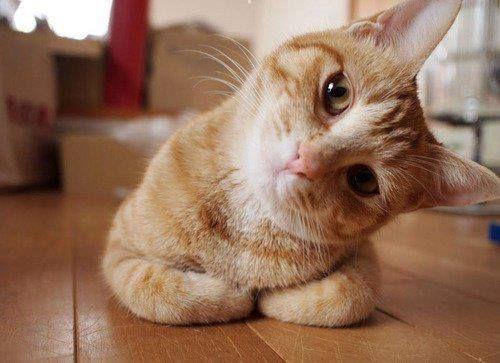 l gatto ha caratteristiche fortemente diverse dall'uomo, possiede attitudini e comportamenti sociali precisi, e va considerato proprio per le sue sp