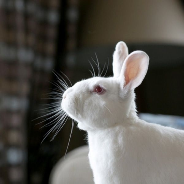 Bunnies Are Probably The Most Amazing Animals Ever Here S Why You Shouldn T Eat Or Exploit Them Animals Pet Rabbit Animal Photography