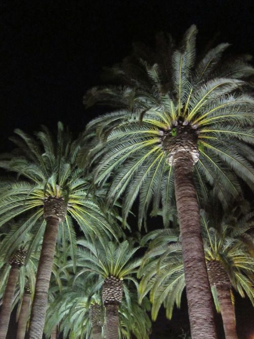 palm trees in the light, I can see late at night