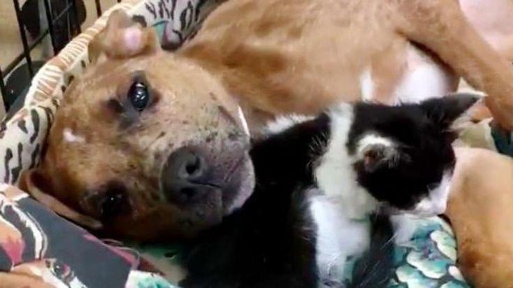 Insieme è meglio. King è un cucciolo di cane di otto mesi arrivatoalla Kentucky Humane Societycon una zampa rotta: la frattura non è stata trattata per settimane e l'infezione gli ha risparmiato la