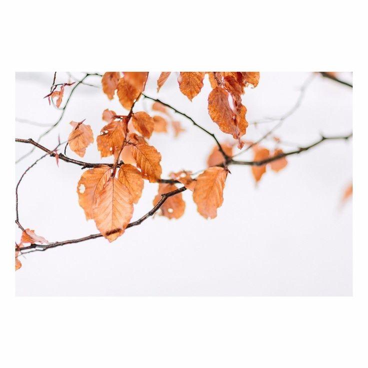 #julienbonjourphotographe #photographer #photography #naturallight #sunlight #storytelling #liveforthestory #light #lookslikefilm #lifeofadventure #fineart  #canon @canon_photos @canonfrance #canonfrance #fb  #annecy #geneve #hautesavoie #geneva #france #lyonphotographe #lyon #chamonix #megeve #mothernature #mountains #nature