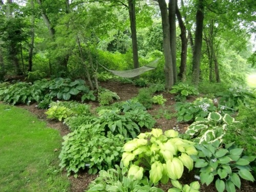 This is what i would like my overgrown wooded area in the for Landscaping ideas for wooded areas