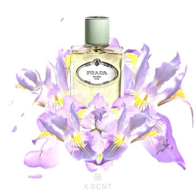 """Mi piace"": 198, commenti: 8 - X-SCNT (@ex.scent) su Instagram: ""X-SCNT LOVES Infusion d'Iris by Prada @prada #prada #infusiondiris #pradalesInfusions #pradaperfume…"""
