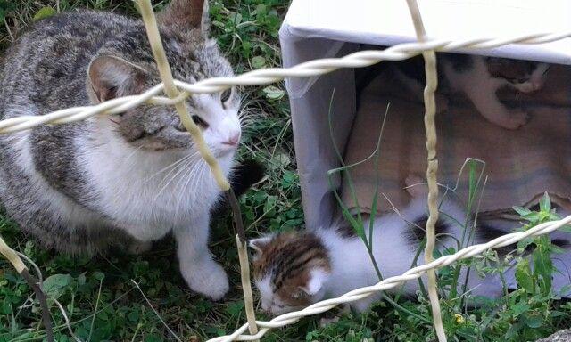 Mamma gatta con il suo tenero gattino