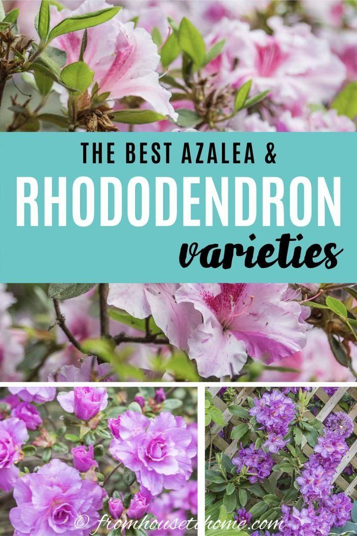2522ad725b04daac2150d06afa539756 - Best Gardens For Azaleas And Rhododendrons