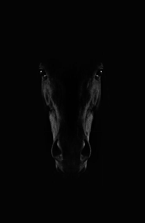 Black Horse Photograph by Adis Spahic – National Geographic Your Shot – #Adis #Fo … – Black