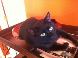 LOST CATDate Listed	 11-Jul-13 Last Edited	 11-Jul-13 Address	 Calgary, AB T3G 5K2, Canada  View map Bailey went missing yesterday at approximatly 1pm.   He is a domestic short hair, solid black with white tuffs on his belly.   He was lost in the community of Royal Oak.  He is microchipped, neutered, and safe to approach.  Please call me at 403-478-7387 if found.