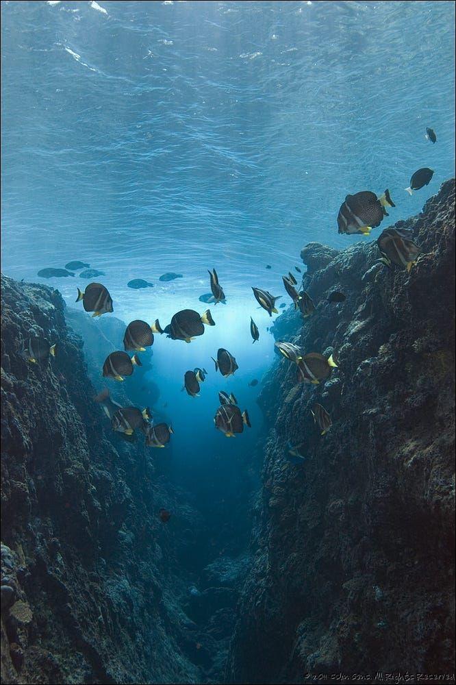 Pin on deep sea