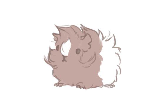 how to draw a cute guine pig