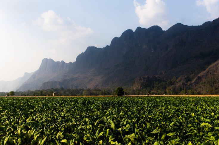 Tobacco fields in Kong Lo, Laos