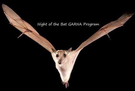 Night of the Bat GARNA Program